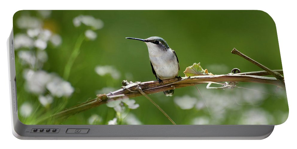 Hummingbird Portable Battery Charger featuring the photograph Meadow Hummingbird by Christina Rollo