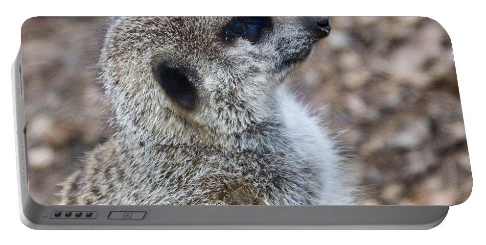 Meerkat Portable Battery Charger featuring the photograph Meerkat Portrait by Douglas Barnett