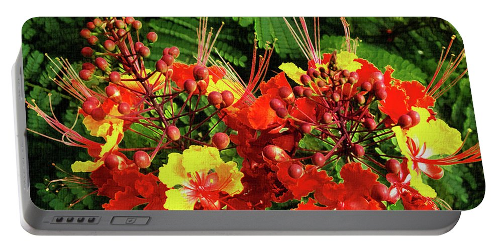 Mona Stut Portable Battery Charger featuring the photograph Mexican Bird Of Paradise by Mona Stut