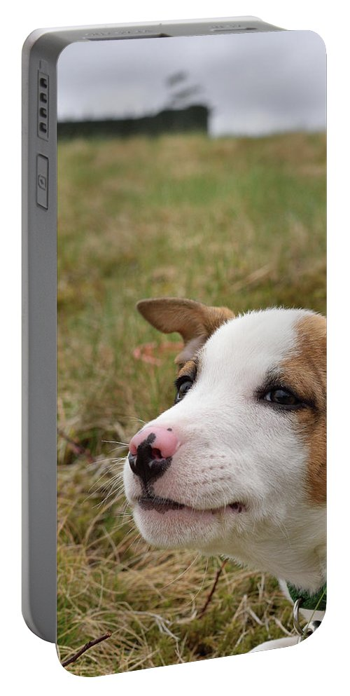 Catahoula Leopard Portable Battery Charger featuring the photograph Mischief On The Farm by Justin Mountain