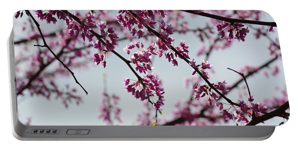 Misty Spring Morning Portable Battery Charger featuring the photograph Misty Spring Morning by Maria Urso