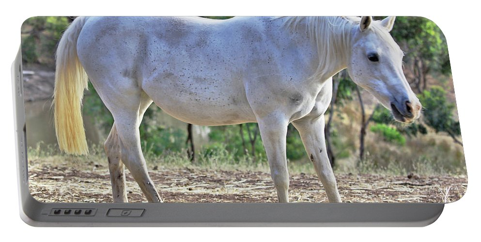 Horse Portable Battery Charger featuring the photograph Mitzy by Stephen Mitchell