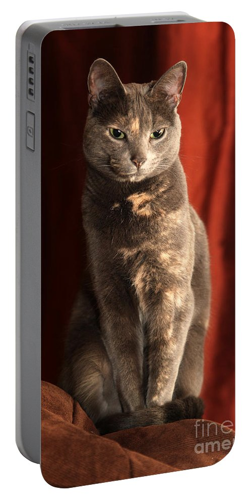 Cat Portable Battery Charger featuring the photograph Mollie by Amanda Barcon