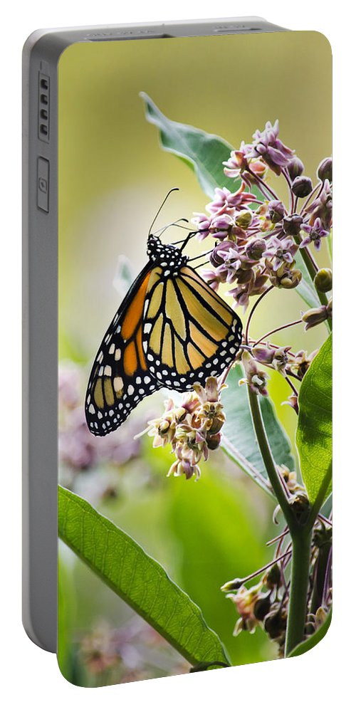 Monarch Butterfly Portable Battery Charger featuring the photograph Monarch Butterfly On Milkweed by Christina Rollo