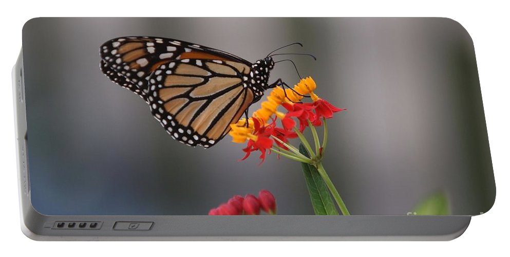 Butterfly Portable Battery Charger featuring the photograph Monarch Butterfly On Milkweed by Randy Matthews