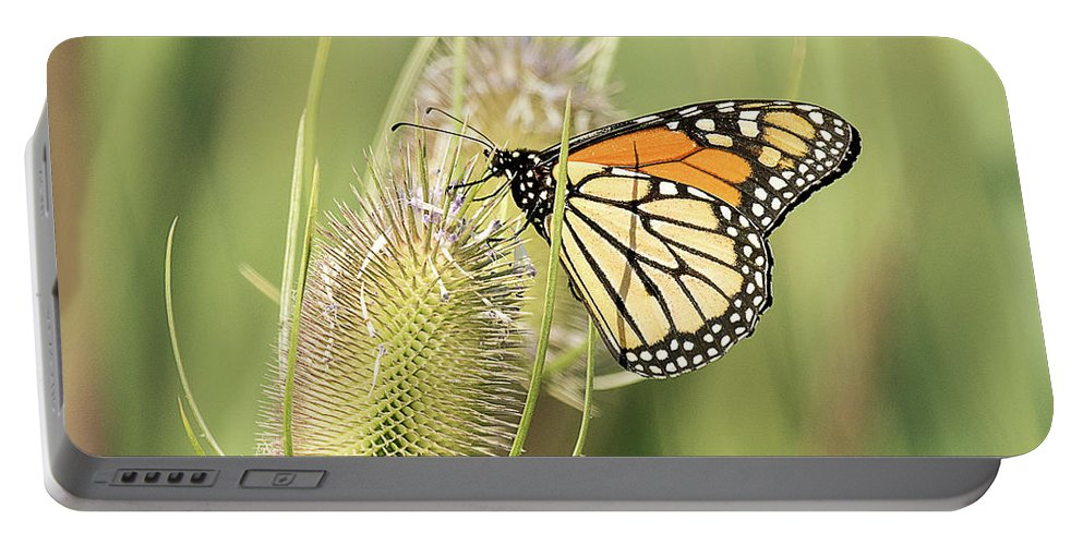 Butterfly Portable Battery Charger featuring the photograph Monarch On A Thistle by Dennis Hammer