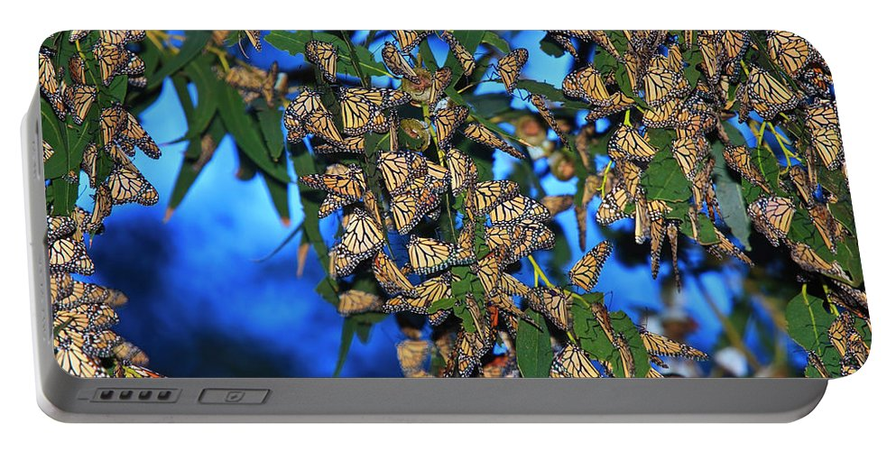 Monarch Cluster Portable Battery Charger featuring the photograph Monarchs by Beth Sargent