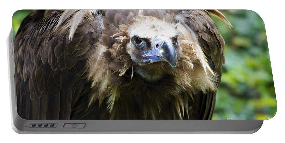 Black Vulture Portable Battery Charger featuring the photograph Monk Vulture 3 by Heiko Koehrer-Wagner
