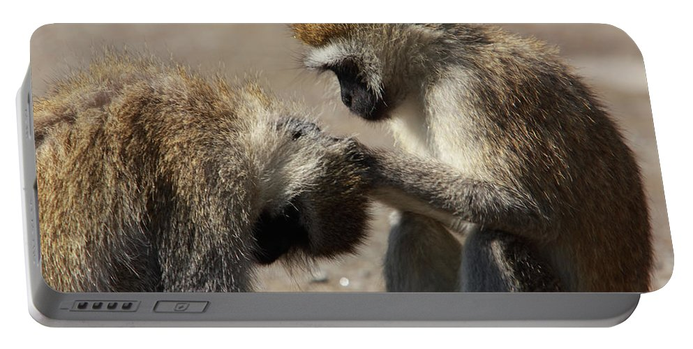 Ape Portable Battery Charger featuring the photograph Monkeys Grooming by Aidan Moran
