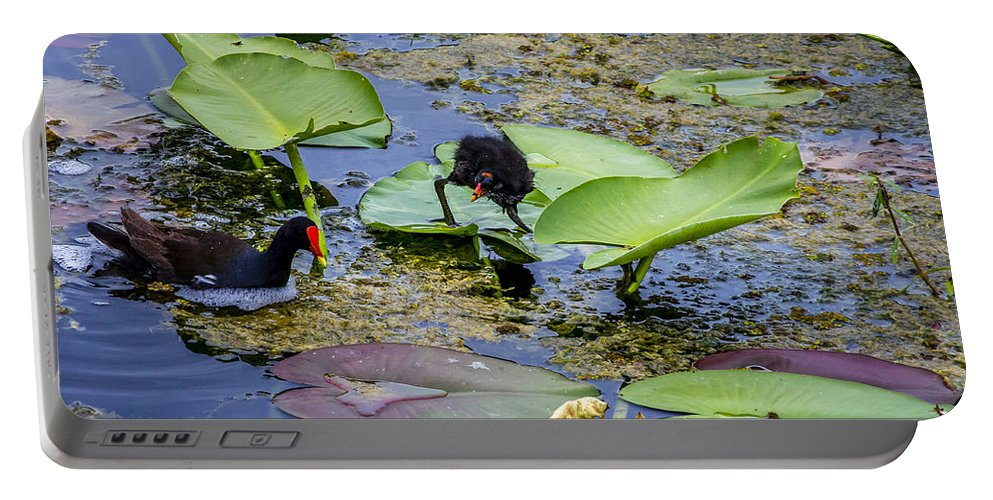 Animal Portable Battery Charger featuring the photograph Moorhen N Baby 2 by Nancy L Marshall