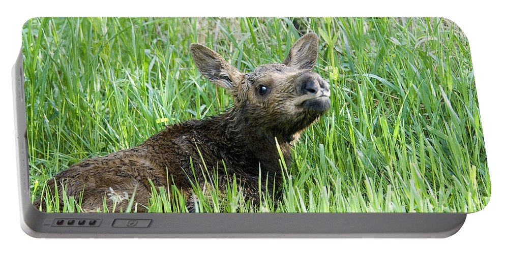 Moose Portable Battery Charger featuring the photograph Moose Baby by Gary Beeler