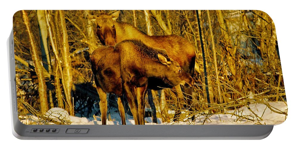 Morning Portable Battery Charger featuring the photograph Moose In The Morning by Juergen Weiss