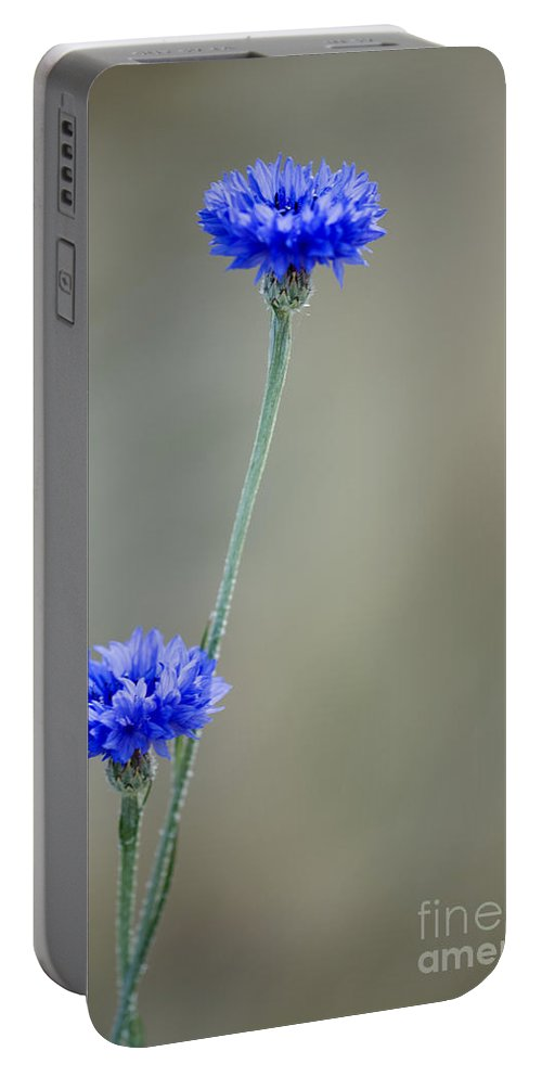 Cornflowers Portable Battery Charger featuring the photograph More Bachelors Buttons by Inga Spence