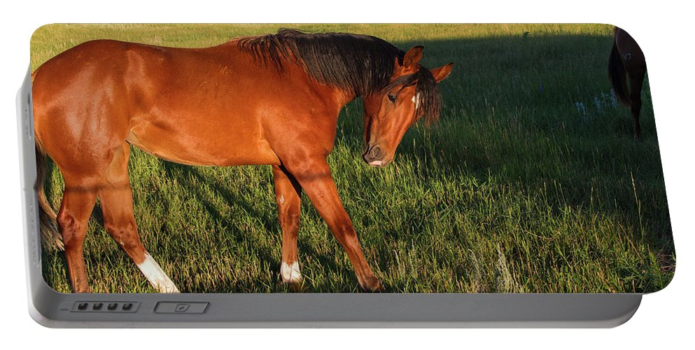 Horse Portable Battery Charger featuring the photograph Morning Greeting by Alana Thrower