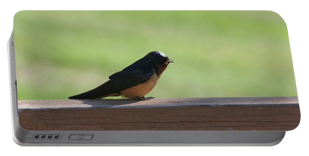Barn Swallow Nesting Bird Singing Nature Wild Portable Battery Charger featuring the photograph Morning Song by Andrea Lawrence