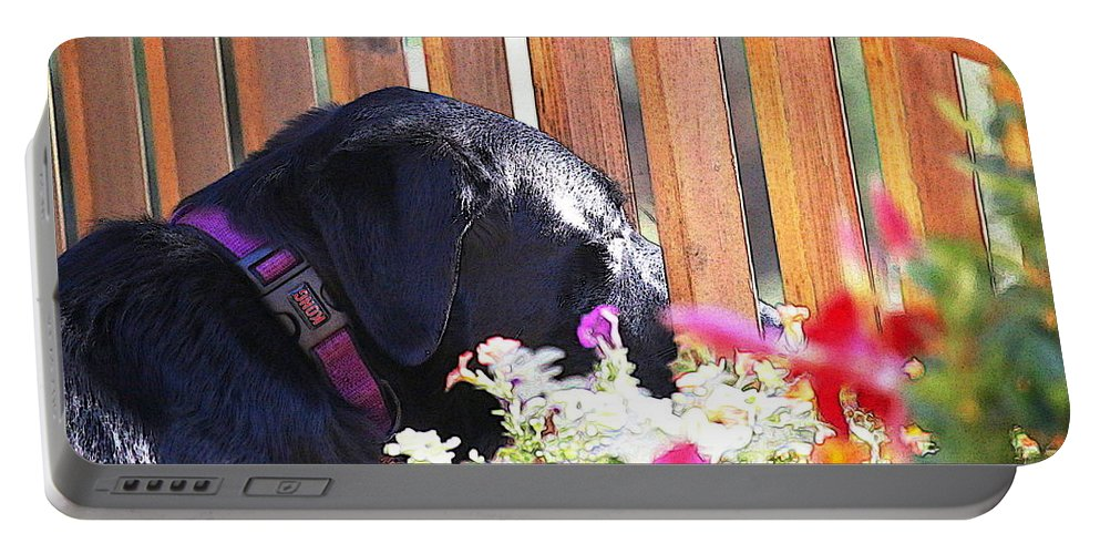 Dog Portable Battery Charger featuring the photograph Morning Sunshine by Tammy Baird