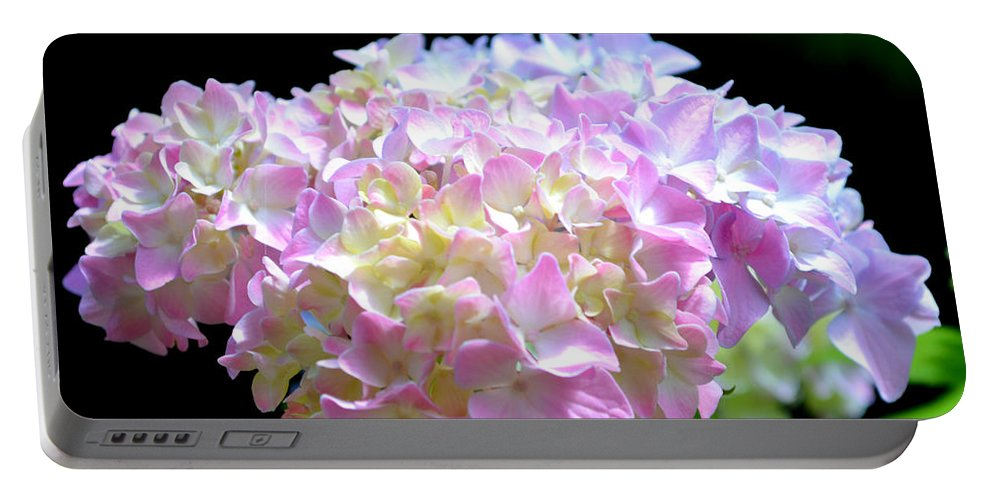 Flower Portable Battery Charger featuring the photograph Morning Whisper - Hydrangea by H Cooper