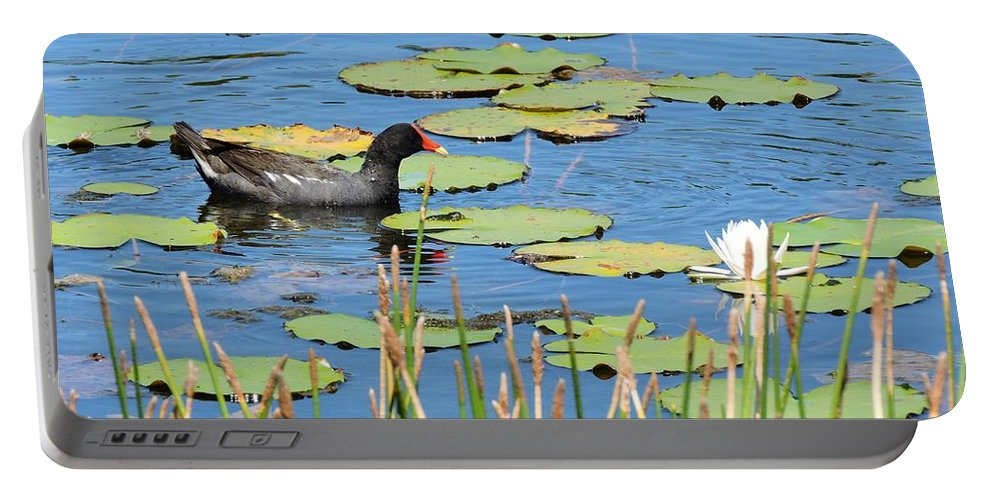 Moorhen Portable Battery Charger featuring the photograph Mother Moorhen by Beth Williams