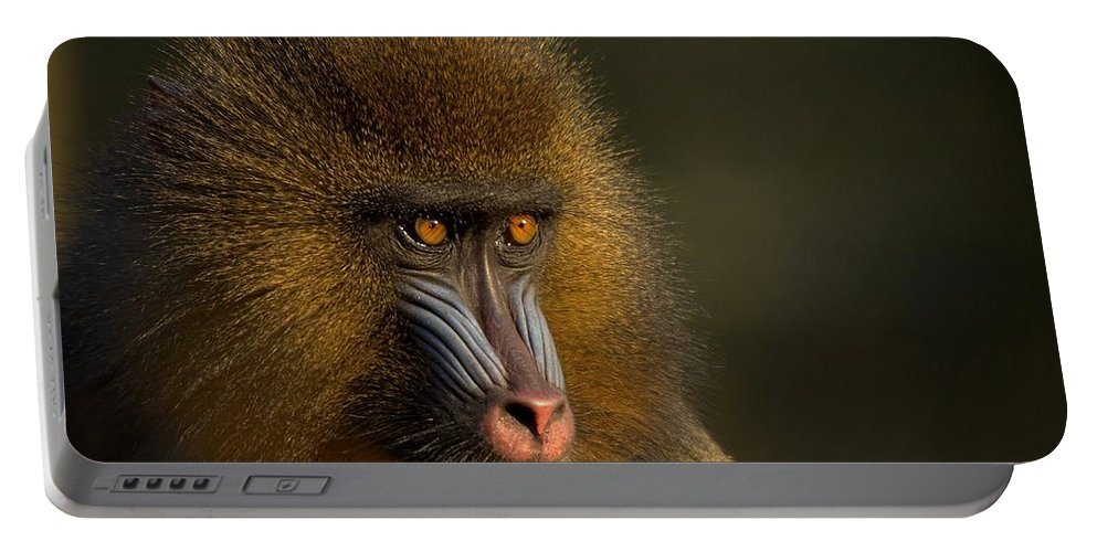 Wildlife Portable Battery Charger featuring the photograph Mother's Finest by Jacky Gerritsen