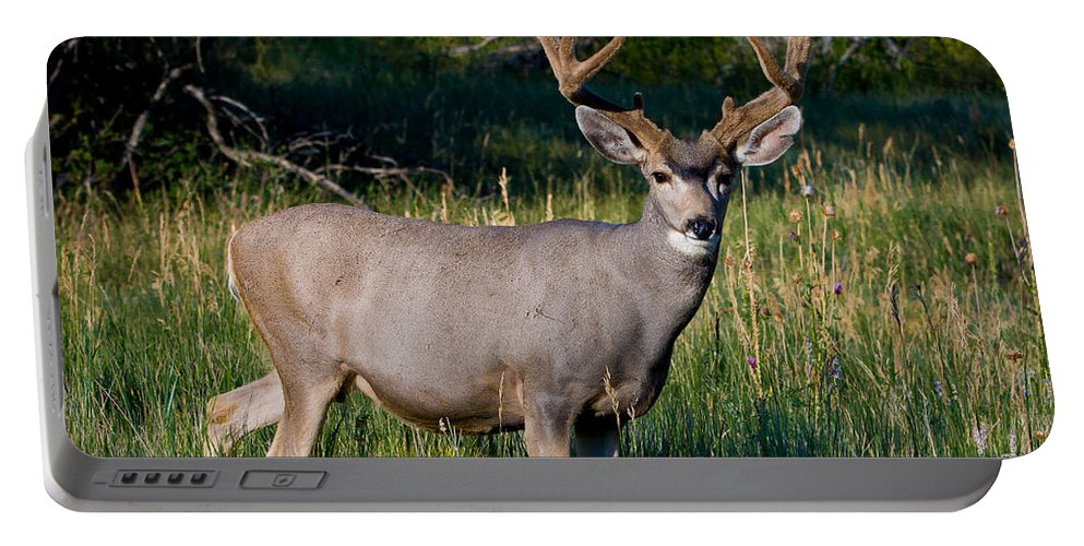 Animals Portable Battery Charger featuring the photograph Mountain Buck by Rikk Flohr