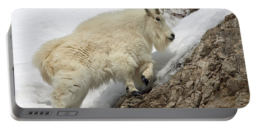 Animals Portable Battery Charger featuring the photograph Mountain Goat With Grace by DeeLon Merritt