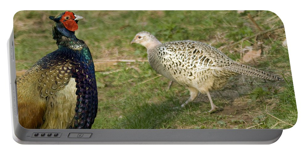 Pheasant Portable Battery Charger featuring the photograph Mr And Mrs Pheasant by Angel Ciesniarska