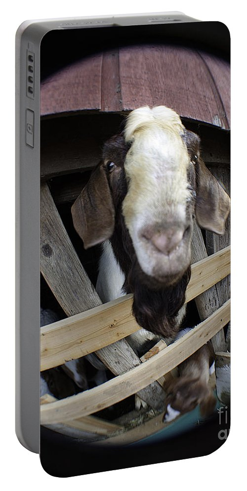 Art Portable Battery Charger featuring the photograph Mr B Goat by Clayton Bruster