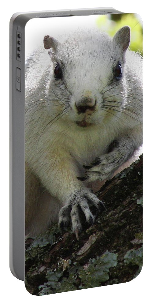 Squirrel Portable Battery Charger featuring the photograph Mr. Inquisitive I by Betsy Knapp