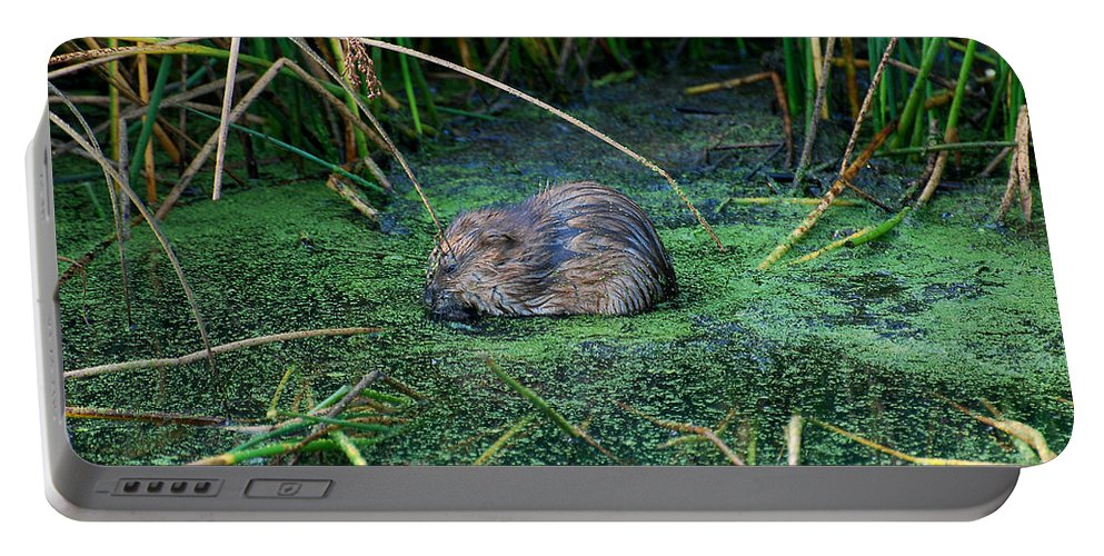 Muscrat Portable Battery Charger featuring the photograph Mr. Muscrat by Todd Hostetter