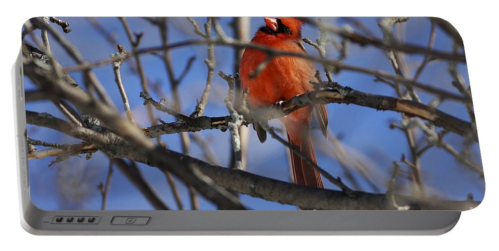 Bird Portable Battery Charger featuring the photograph Mr. Red Beauty by Deborah Benoit