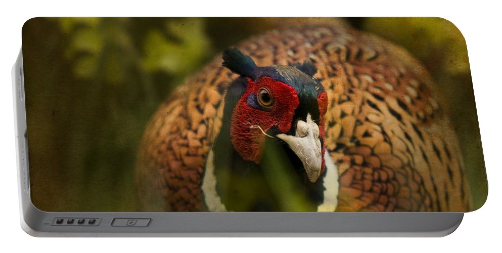Pheasant Portable Battery Charger featuring the photograph Mr Spring by Angel Ciesniarska