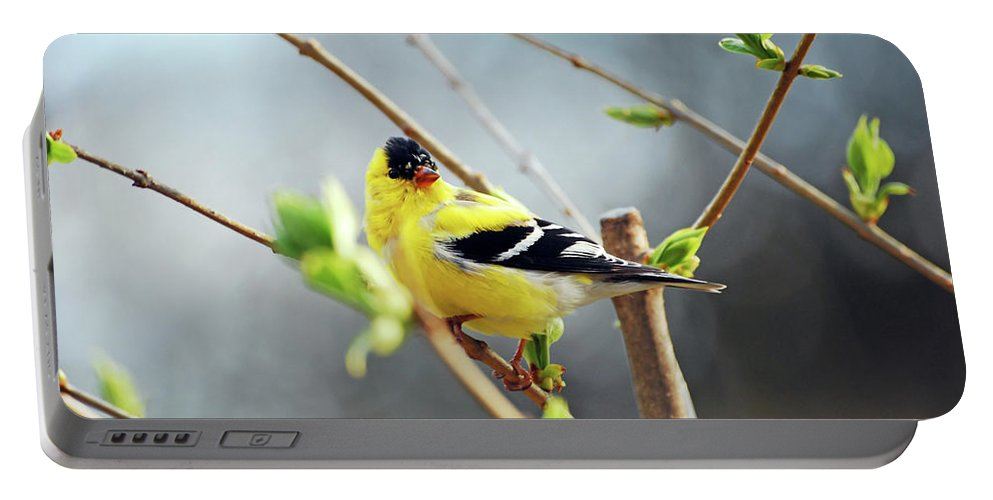 Finch Portable Battery Charger featuring the photograph Mr. Sunshine by Lori Tambakis