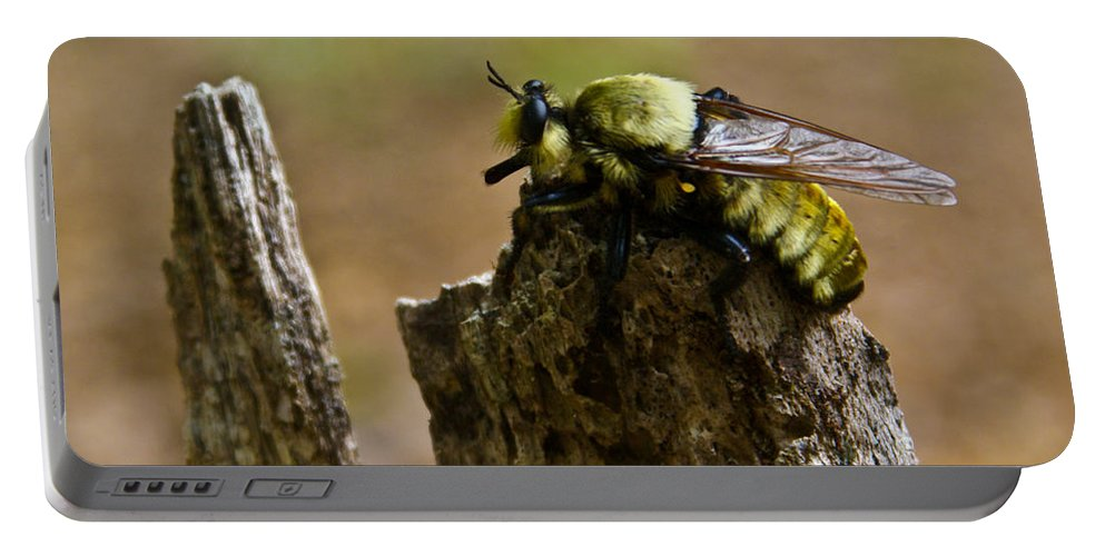 Fly Portable Battery Charger featuring the photograph Mrs. Fly by Douglas Barnett