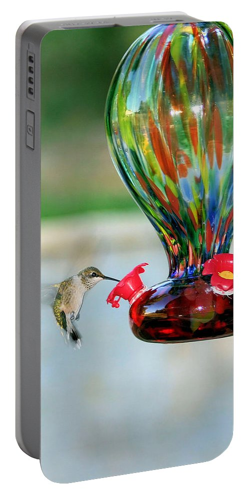 Hummingbird Portable Battery Charger featuring the photograph Mrs. Hummer by Kristin Elmquist