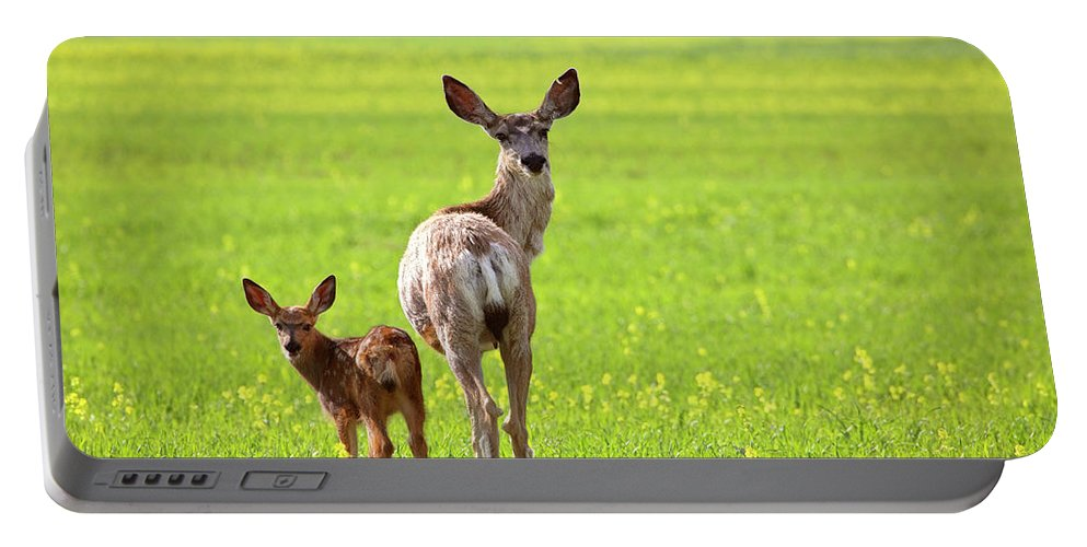 Mule Deer Portable Battery Charger featuring the digital art Mule Deer Doe And Fawn Looking Back Over Their Shoulders by Mark Duffy
