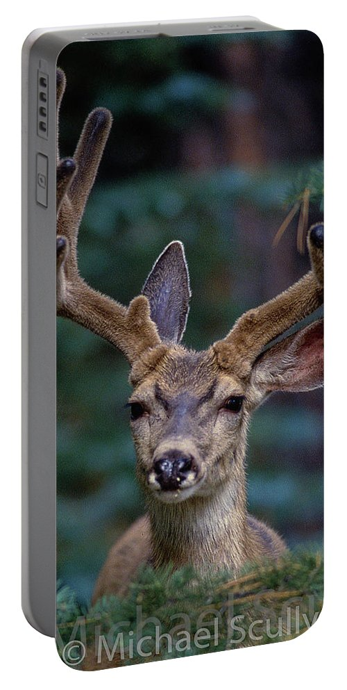Arizona Portable Battery Charger featuring the photograph Mule Deer In Velvet 02 by Michael Scully