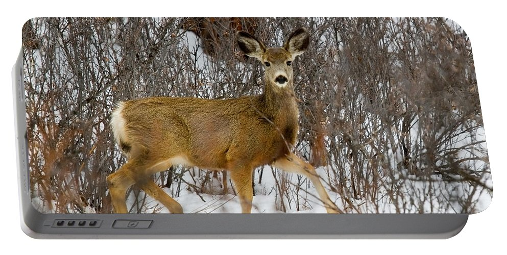 Deer Portable Battery Charger featuring the photograph Mule Deer Portrait In Heavy Snow by Steve Krull