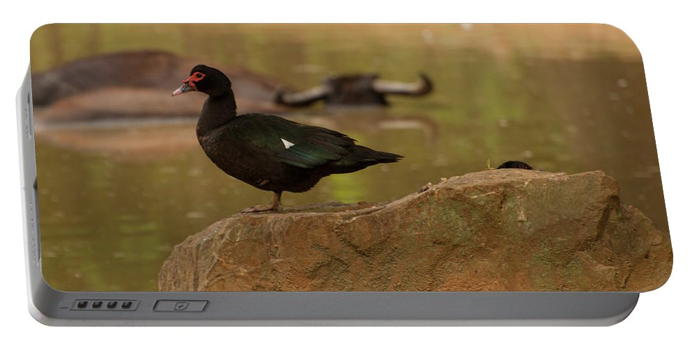 Muscovy Duck Portable Battery Charger featuring the photograph Muscovy Duck by Chris Flees