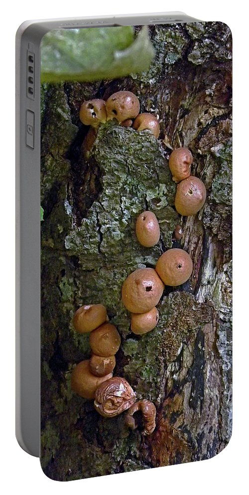 Tree Trunk Portable Battery Charger featuring the photograph Mushroom Tree Trunk by Sherry Smith