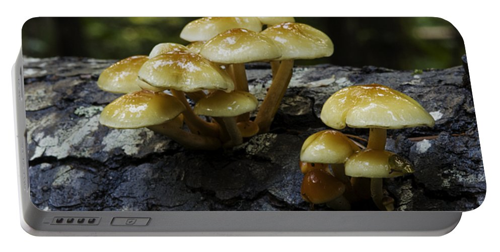 British Columbia Portable Battery Charger featuring the photograph Mushrooms by Bob Christopher