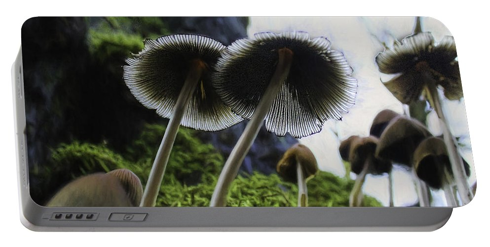 Mushrooms Portable Battery Charger featuring the photograph Mushrooms From Below by Lorraine Baum