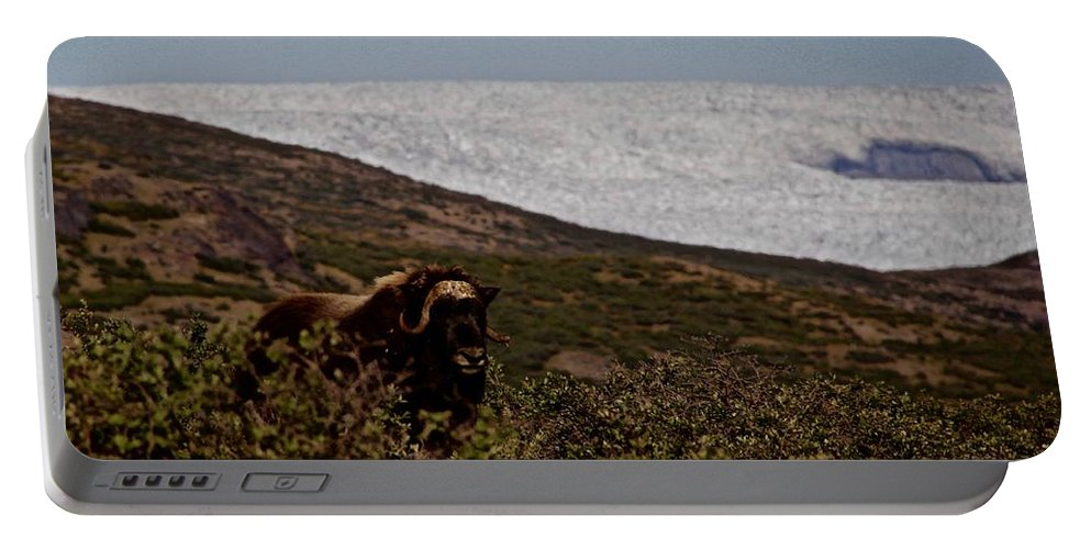 Landscape Portable Battery Charger featuring the photograph Musk Ox In Front Of Greenlandic Icecap by Allan Iversen
