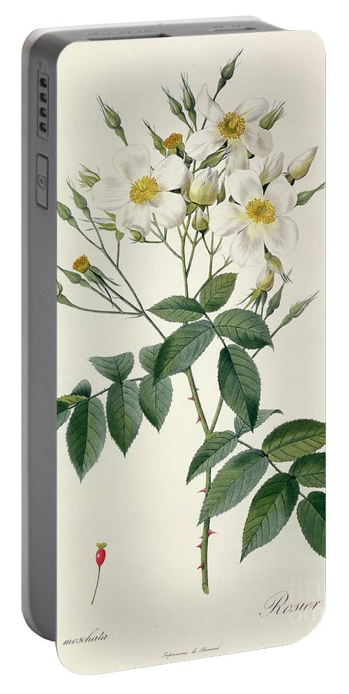 Rosa Portable Battery Charger featuring the drawing Musk Rose by Pierre Joseph Redoute