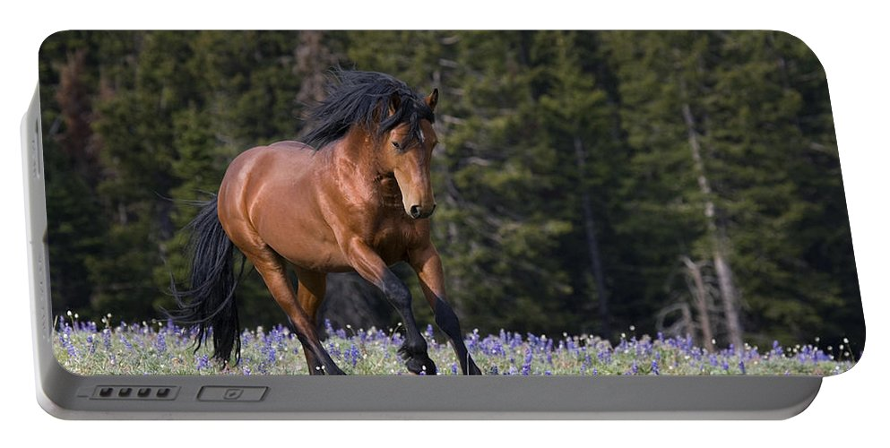 Horse Portable Battery Charger featuring the photograph Mustang Stallion And Lupines by Jean-Louis Klein & Marie-Luce Hubert