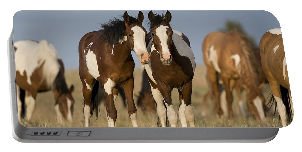 Horse Portable Battery Charger featuring the photograph Mustangs by Jean-Louis Klein & Marie-Luce Hubert