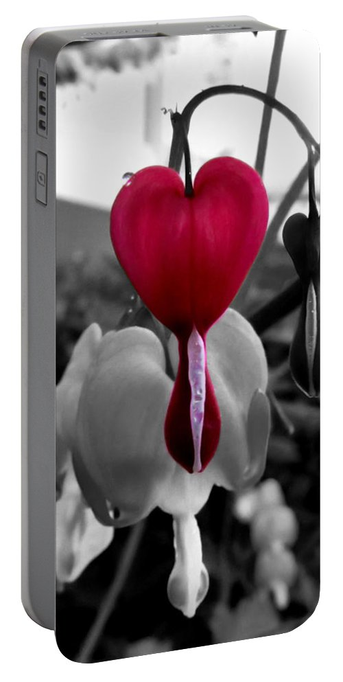 Bleeding Heart Portable Battery Charger featuring the photograph My Bleeding Heart by September Stone
