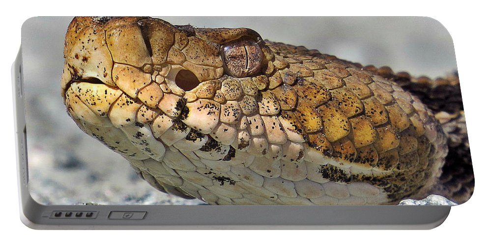 Reptile Portable Battery Charger featuring the photograph My Good Side by Norman Vedder