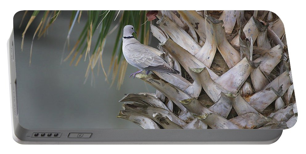Palm Portable Battery Charger featuring the photograph My Own Palm Tree by Deborah Benoit