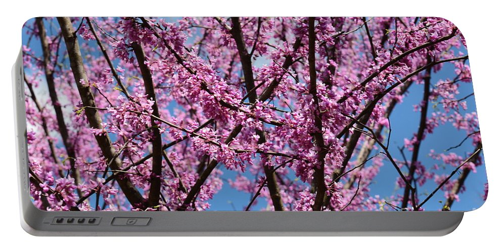 My Redbuds In Bloom Portable Battery Charger featuring the photograph My Redbuds In Bloom by Maria Urso
