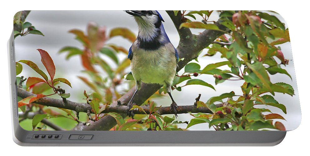 Bluejay Portable Battery Charger featuring the photograph My Reward by Deborah Benoit
